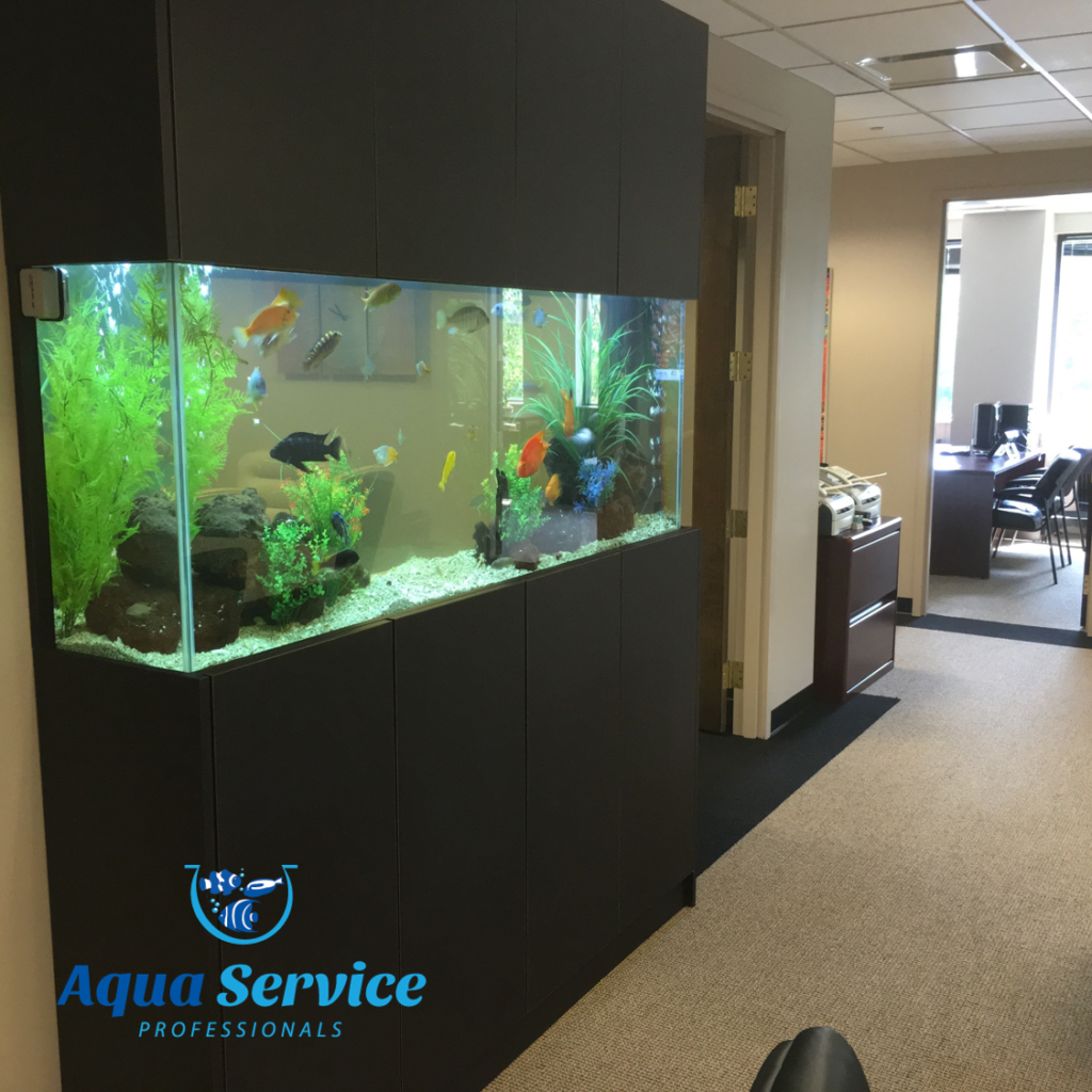 Fish tank cleaning service -  Aquarium Cleaning Service Uk Oceanlife Aquatics Gallery Aqua Service Professionals