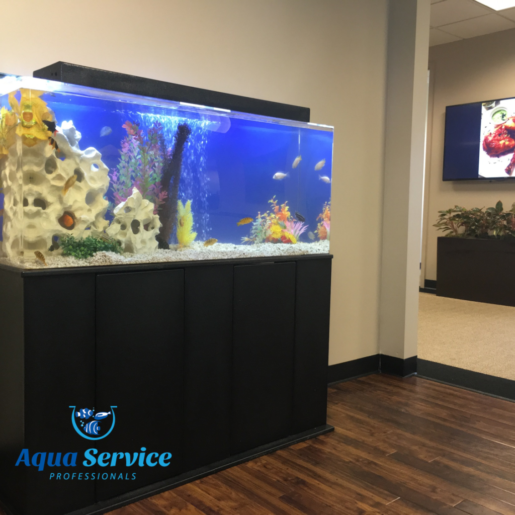 Fish tank cleaning service -  Gallery Aqua Service Professionals Newark Aquarium Cleaning Service Aqua Service Professionals Aquarium