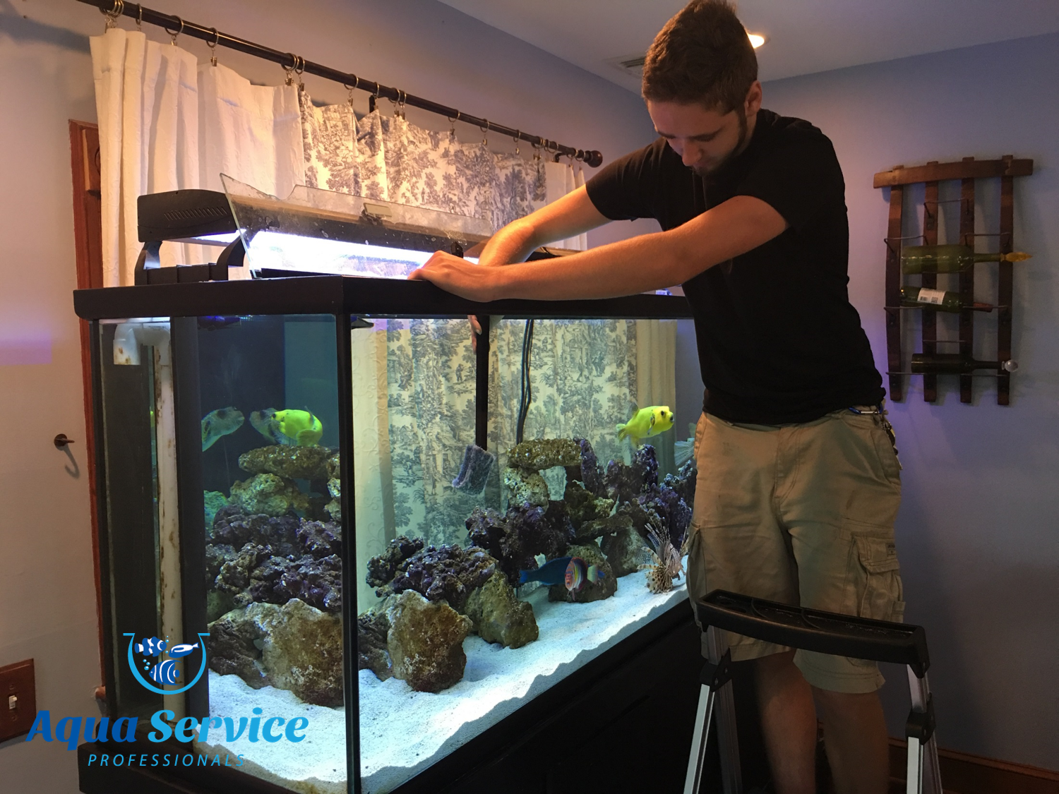 Fish tank cleaning service - Fish Tank Cleaning Service