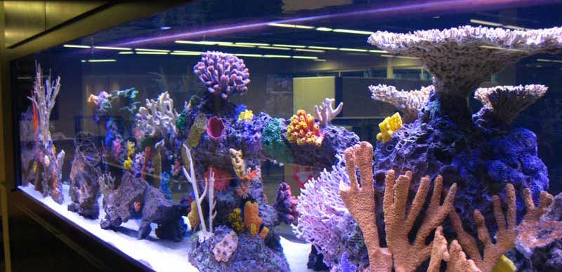 Artificial Reef 2
