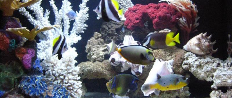Fish Only with Artificial Coral 3
