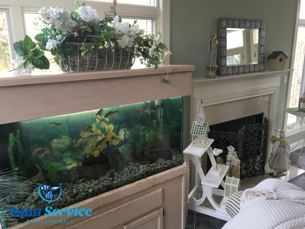 Fish tank cleaning service - Gallery