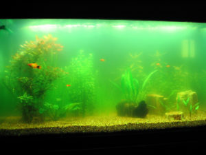Aquarium Care Services- Tips from the pros