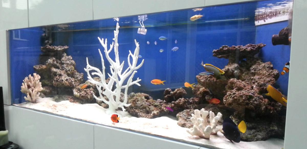 Welcome To CK Custom Aquarium