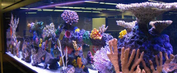 Artificial-Reef-2
