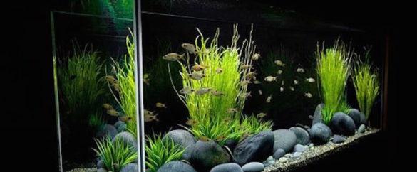 Planted-Aquarium-2