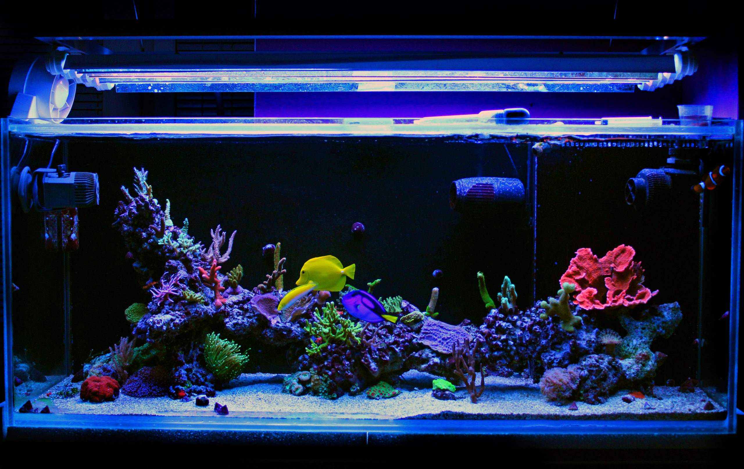 professional aquarium services
